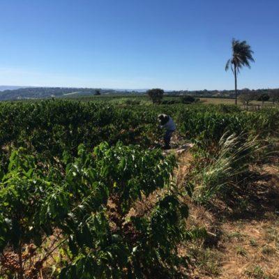 Fazenda Bananal Alta Mogiana Brazil