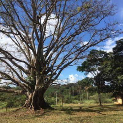 Fazenda St Tereza do Marfim Alta Mogiana Brazil